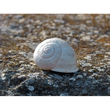 - Framed Art for Your Wall Lichen Spiral Stone Snail 10x13 Frame