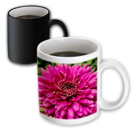 Jenna Mug (3dRose Pink Jenna Dahlia Flower, Magic Transforming Mug, 11oz)