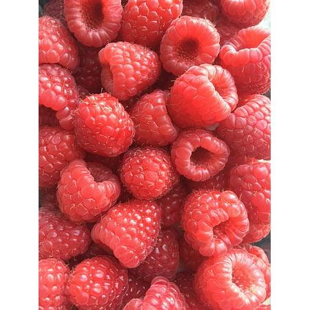Canvas Print Berries Fresh Raspberries Summer Stretched Canvas 10 x 14