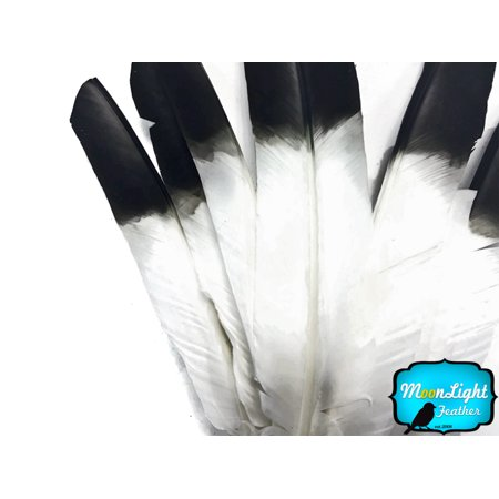 6 Pieces - Black Tipped Turkey Pointers 'Imitation Eagle' Wing Large Feathers](Large Black Feather Wings)