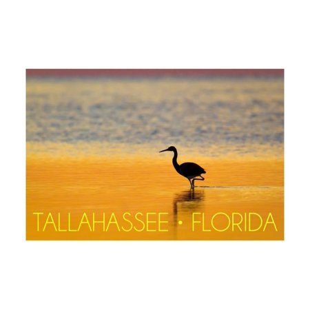 Tallahassee, Florida - Golden Heron Print Wall Art By Lantern Press - Party City In Tallahassee Florida
