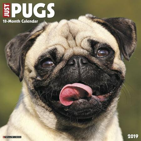2019 Just Pugs Wall Calendar, by Willow Creek Press