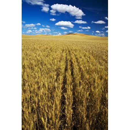 Harvest By Terry - Farm Fields of Golden Harvest Wheat, Palouse Country, Washington, USA Print Wall Art By Terry Eggers