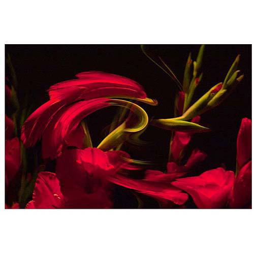 "Trademark Art ""Gladiolus III"" Canvas Art by Martha Guerra, 16x24"