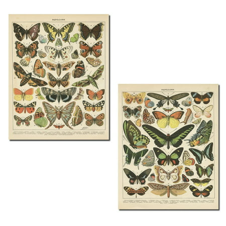 Popular Vintage French Types of Papillons Butterflies Set; Two 11x14in Paper Print Posters