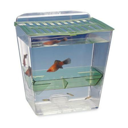 Penn Plax Breed and Show Nursery Fish Tank