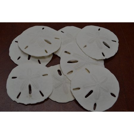 50 Pcs Florida Keyhole Sand Dollars Sea Shell Craft 2