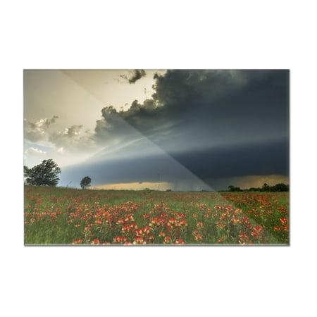 Flower Field & Storm Cloud - Lantern Press Photography (12x8 Acrylic Wall Art Gallery Quality) Cloud 9 Design Flower