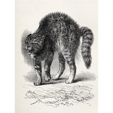 Image of Cat Terrified At A Dog Illustration From Life By Mr Wood From The Book The Expression Of The Emotions In Man And Animals By Charles Darwin From The Popular Edition Published 1904 Canvas Art - Ken Wels