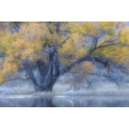 Soft focus view of tree on pond, Bosque del Apache National Wildlife Refuge, New Mexico Print Wall Art By Adam