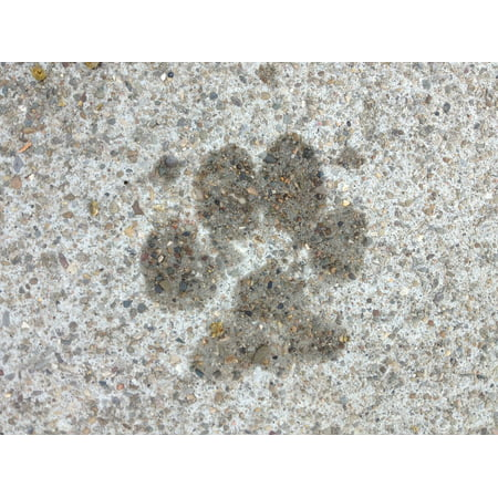Framed Art for Your Wall Paw Print Canine Paws Puppy Dog Paw Imprint Pet 10x13 Frame - Puppy Paw Print