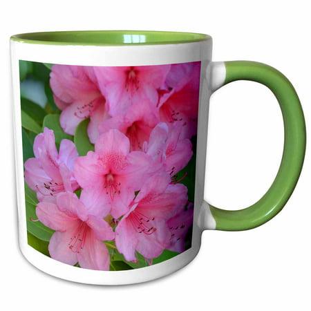 3dRose Beautiful Pink Azalea Flowers - Floral Photography - Spring - Two Tone Green Mug, -