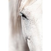 """""""Horse Eye"""" Painting Print on Wrapped Canvas"""
