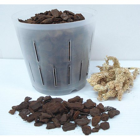 Rusty Orchid - All In One, Everything Needed To Repot Your Orchid - Large Bark - 6 inch pot