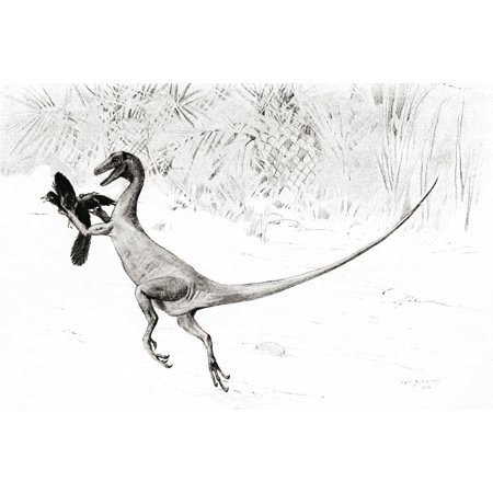 The Bird Catching Ornitholestes Dinosaur In The Act Of Catching The Jurassic Bird Archaeopteryx After The Drawing By Charles R Knight From The Century Illustrated Monthly Magazine May To October