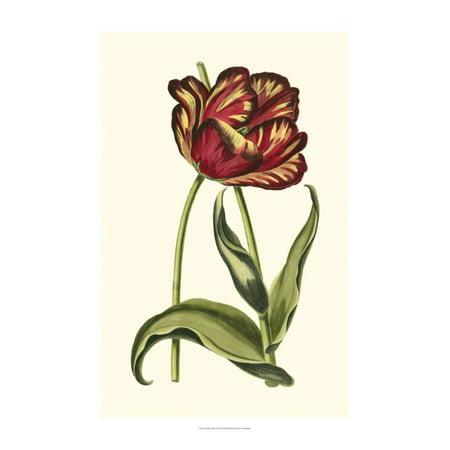 Vintage Tulips VI Print Wall Art By Vision -
