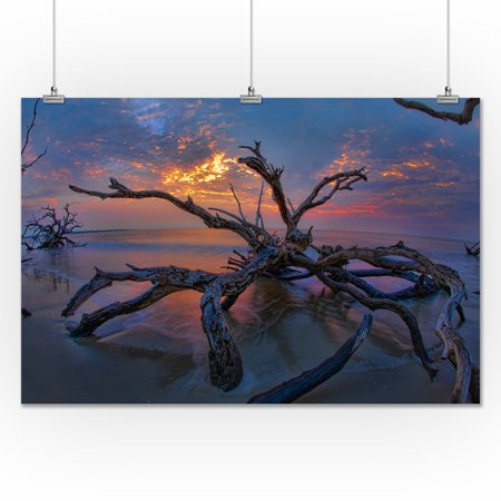 driftwood sunset lantern press photography 24x36 giclee gallery