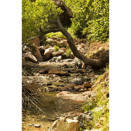 Laminated Poster Taylor Creek Trail Zion National Park Kolob Canyons Poster Print 11 x