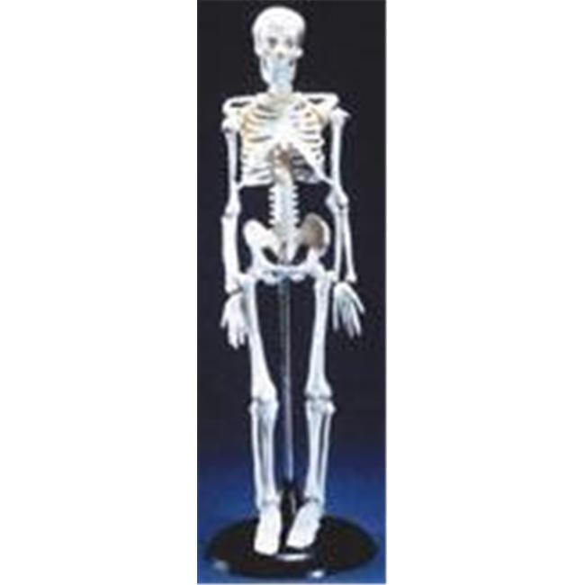 Olympia Sports 12888 Tiny Tim Skeleton