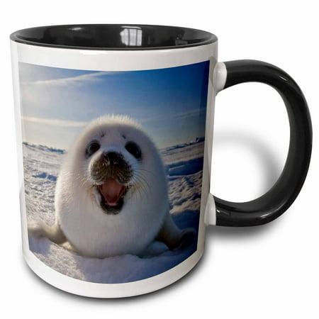 3dRose Harp seal pup, Iles de la Madeleine, Quebec, Canada - CN10 KSU0014 - Keren Su, Two Tone Black Mug, (Harp Seal Kids)