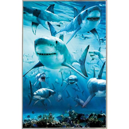 Shark Infested Poster in a Silver Metal Frame (24x36) - Walmart.com