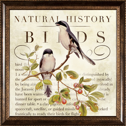 Natural History Birds Framed Art