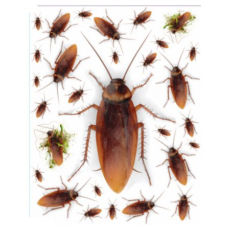 Set Of Removable Creepy Realistic Cockroach Stickers Halloween - Creepy Halloween Window Display