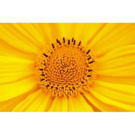 LAMINATED POSTER Spring Flower Summer Yellow Nature Floral Blossom Poster Print 24 x 36
