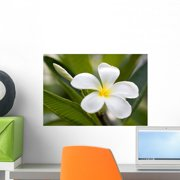 Tropical Flowers Frangipani Plumeria Wall Decal by Wallmonkeys Peel and Stick Graphic (18 in W x 12 in H) WM8949