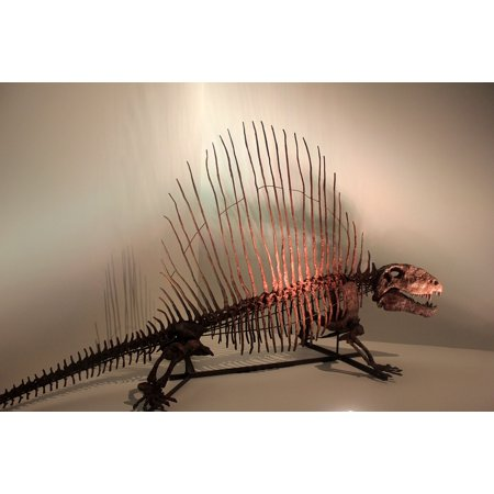 LAMINATED POSTER Bones Dinosaur Skeleton Fossils Dimetrodon Poster Print 24 x 36 ()