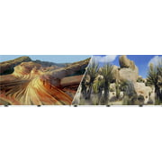 Blue Ribbon Pet Products-Background Double-sided Desert Sand/cactus 12in X 50ft