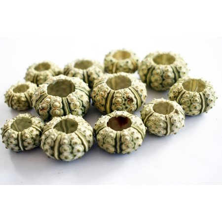 Set of 12 Green Knobby Mini Sea Urchins (3/4