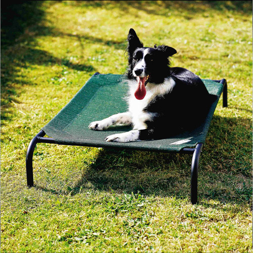 Coolaroo Elevated Pet Bed, Medium, Brunswick Green