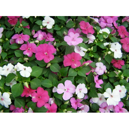 Image of Better Homes 2.5qt Impatiens Ng Bhg
