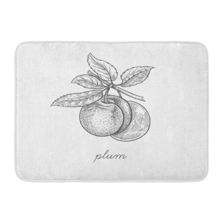 GODPOK Sketch Plum Fruit Plant White for of Health and Beauty Natural Products Vintage Engraving Black Ink Tree Rug Doormat Bath Mat 23.6x15.7