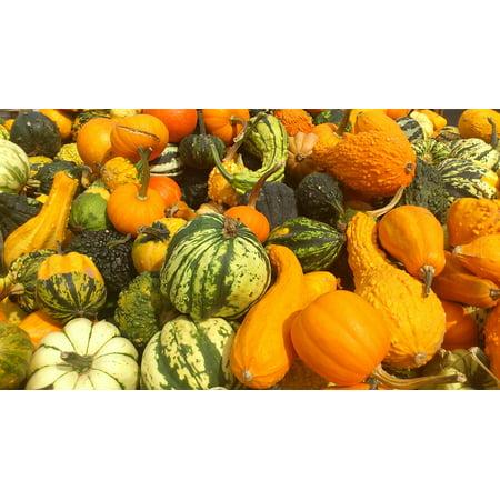 LAMINATED POSTER Food Halol Halloween Pumpkins Autumn Pumpkin Poster Print 24 x 36 for $<!---->