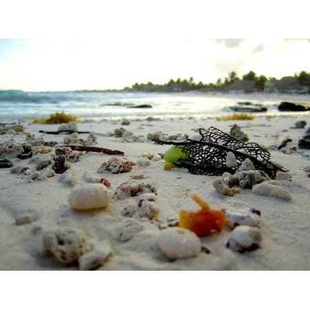 24 Coral Shell - LAMINATED POSTER Beach Shells Travel Sea Shell Shore Sand Coral Poster Print 24 x 36