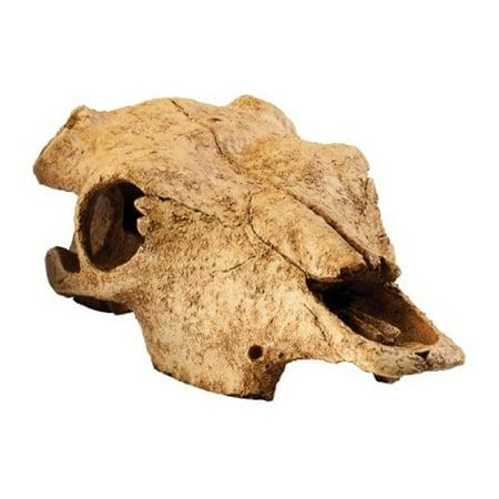 Exo Terra Buffalo Skull Terrarium D