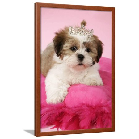 Shih Tzu 10 Week Old Puppy On Pink Cushion Framed Print Wall Art