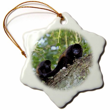 3dRose Mantled Howler Monkey, Lomas de Barbudal, Costa Rica - SA22 MGL0013 - Miva Stock, Snowflake Ornament, Porcelain, 3-inch ()