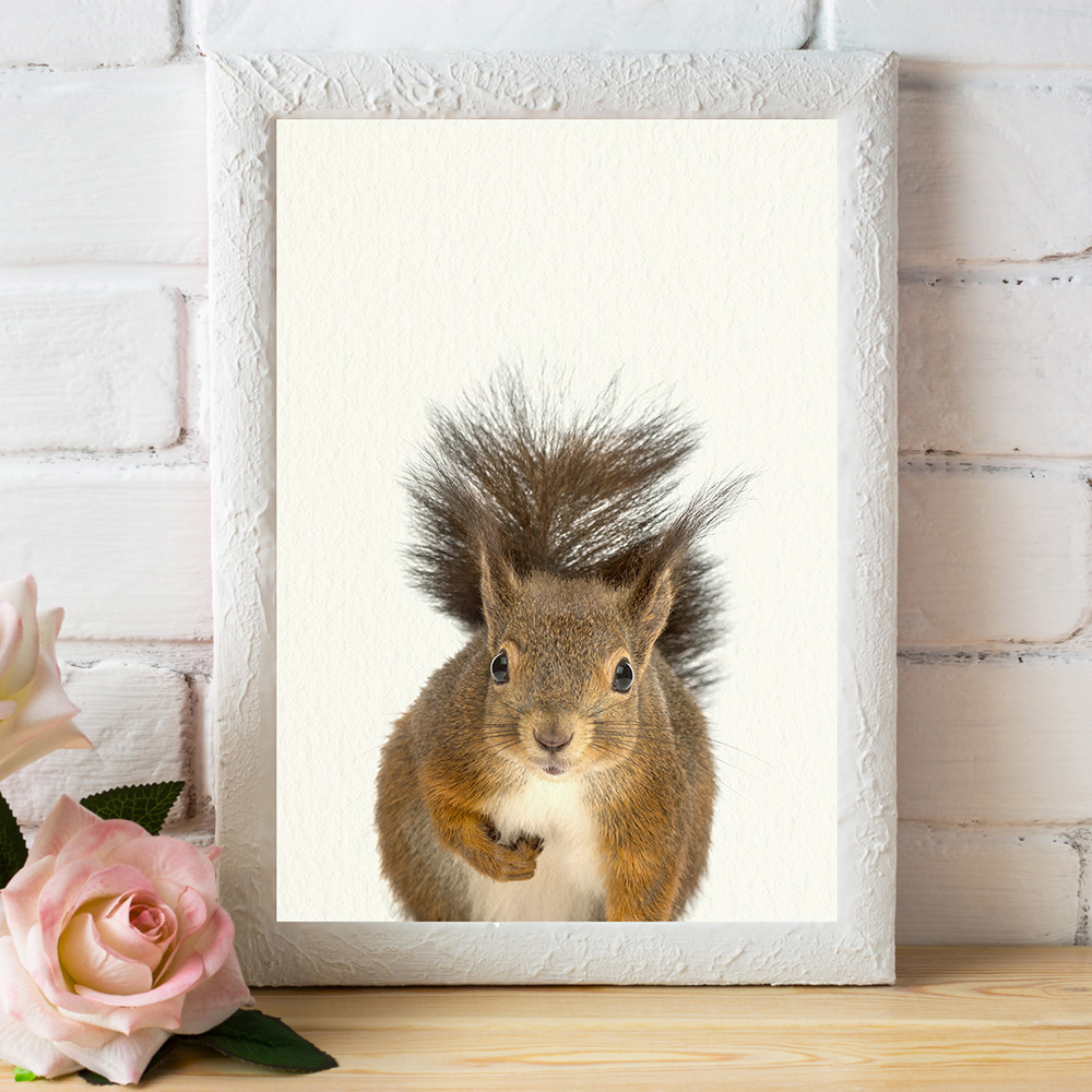 Baby Woodland Squirrel - Nursery Wall Décor Farm Baby Animal Art Print