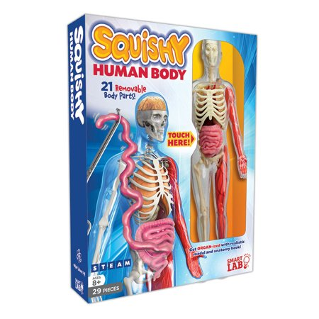 Smart Lab Squishy Human Body Kit