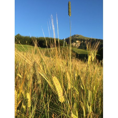 Holiday Brads - Canvas Print Summer Barley Walk Holiday Fiss Tyrol Bread Sky Stretched Canvas 10 x 14