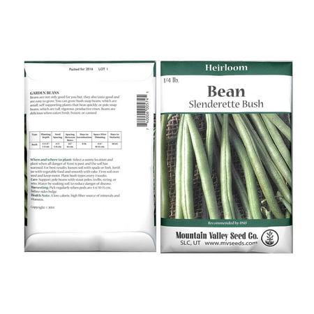 Slenderette Bush Bean Seeds - 4 Oz Packet - Non-GMO, Heirloom Green Snap Bean Seeds - Vegetable Garden Seeds
