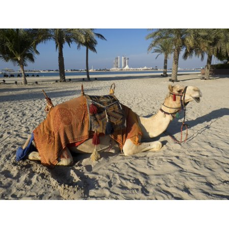 United Arab Emirates Palace - Camel on beach at Emirates Palace Hotel Abu Dhabi United Arab Emirates Poster Print