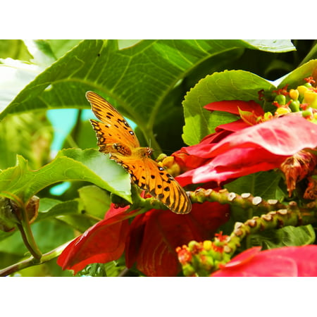 LAMINATED POSTER Butterfly Garden Nature Insect Red Flower Flowers Poster Print 24 x 36
