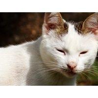 LAMINATED POSTER Feline Feline Stopped Kitten Animal Cat Pet Poster Print 24 x 36