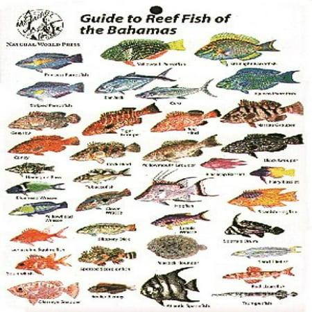 Reef Fish Of Bahamas Card