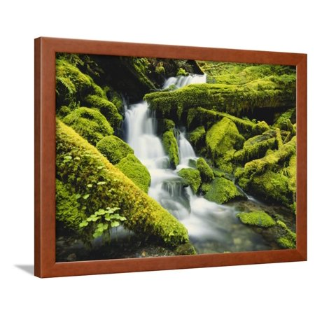 Waterfall over Moss Covered Rock, Olympic National Park, Washington, USA Framed Print Wall Art By Stuart Westmoreland