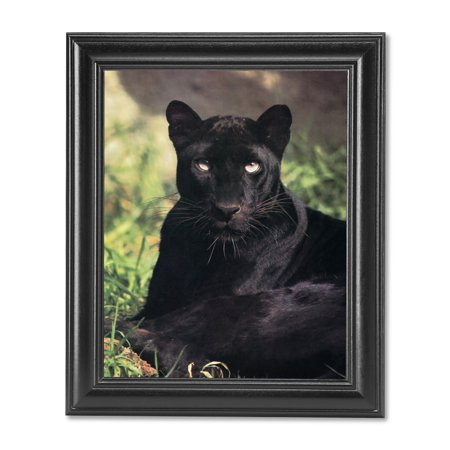Black Panther Cat Laying in Grass Close Up Photo Wall Picture Black Framed